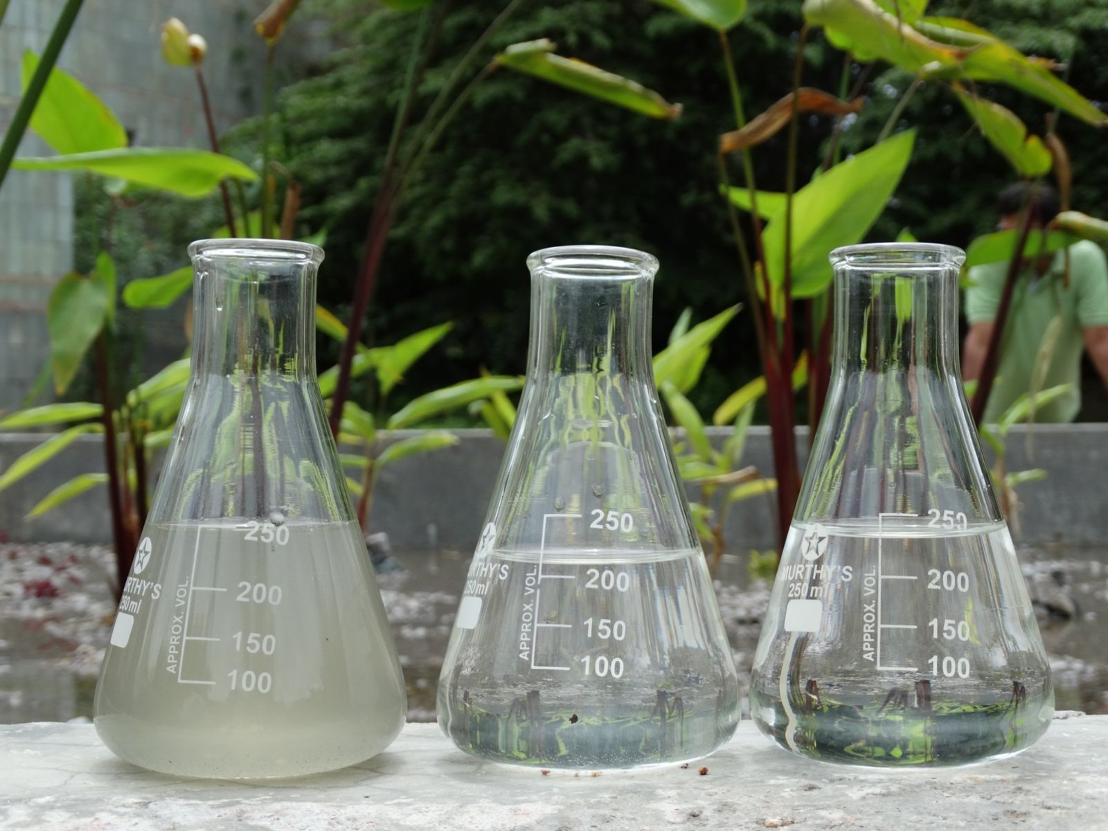Before (left) and after water samples from an Ayala phytoremediation site in Hyderabad, India. Photo: courtesy