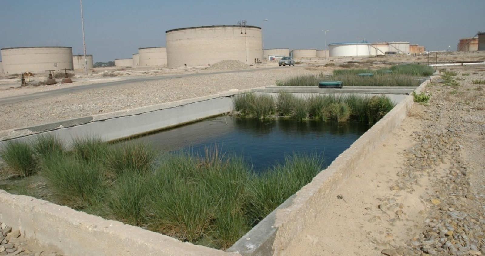 The plants in this Ayala pond treat runoff from the petroleum facility at Kiryat Haim, Israel. Photo: courtesy