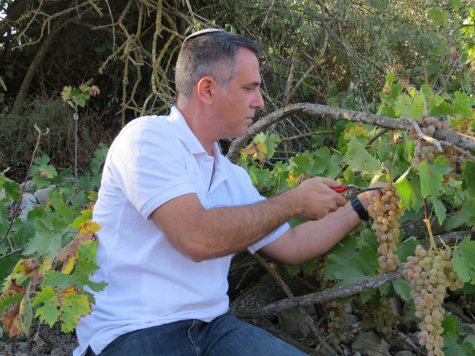 Wine researcher Elyashiv Drori in his Gvaot vineyard. Photo courtesy of Ariel University