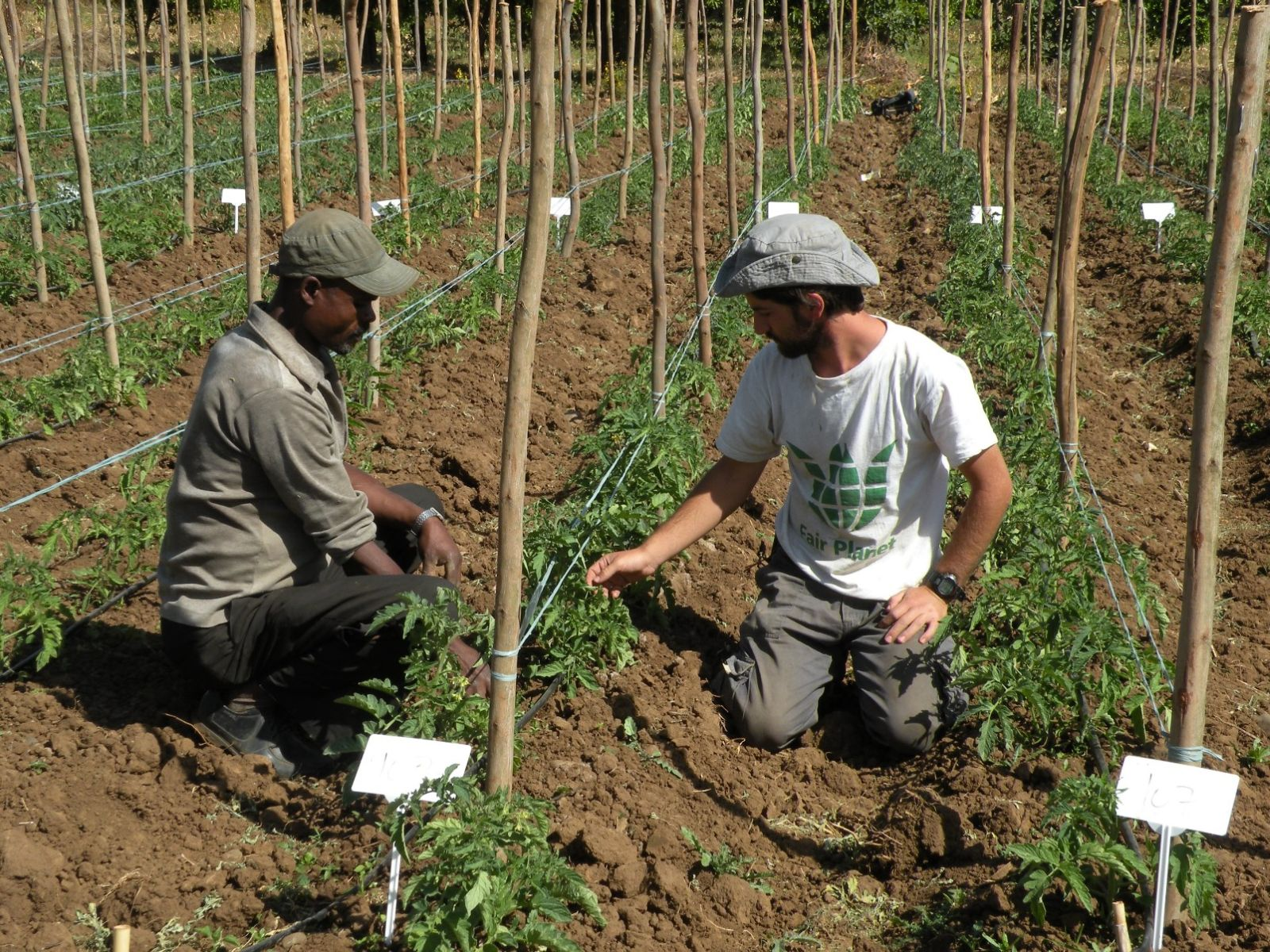 Fair Planet volunteers visit each participating farmer weekly to give advice on best practices. Photo: courtesy