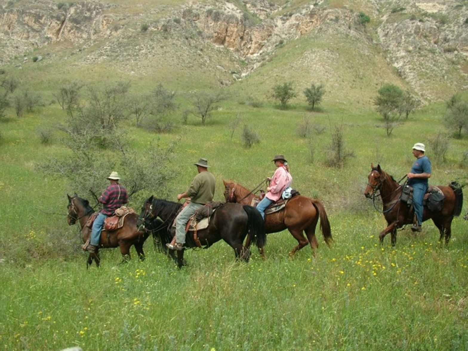 Horses on the Golan Trail. Photo by Israel Eshed
