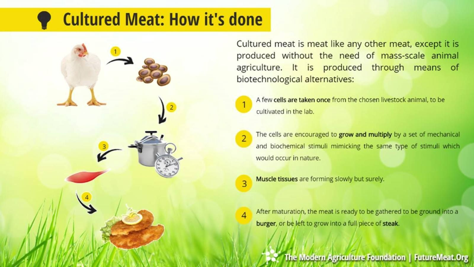 How cultured chicken would be produced. Image courtesy of Modern Agriculture Foundation
