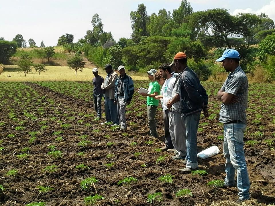 Seeds are chosen by Fair Planet for the exact conditions of the local farms. Photo: courtesy