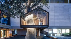 The new tree house at the Israel museum. Photo courtesy