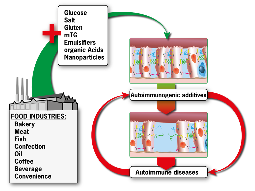This schematic by Patricia Jeremias shows the sequential steps through which industrial food additives induce autoimmune diseases. Image courtesy of the Technion Spokesperson's Office