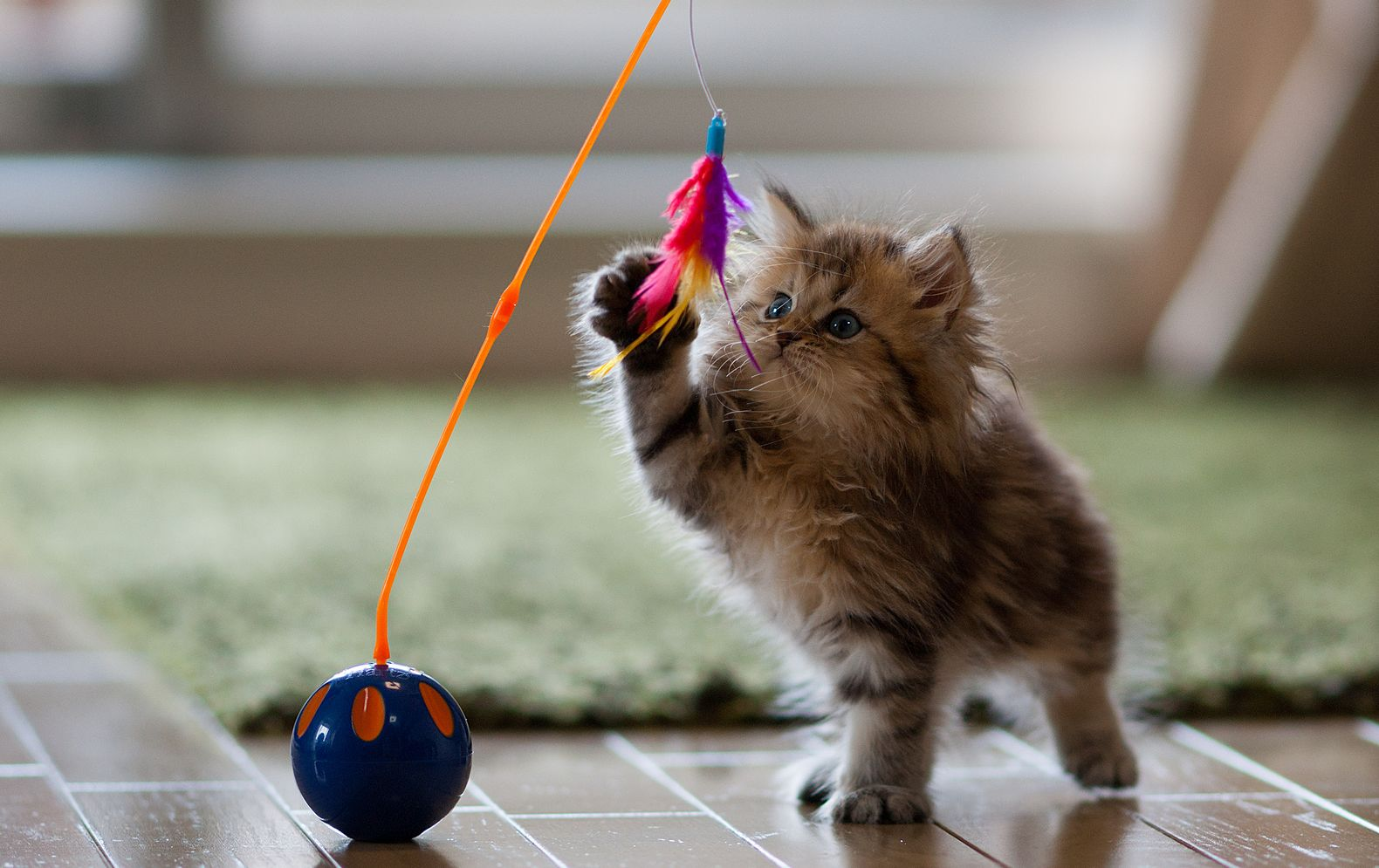 7 of the coolest gadgets for your cat israel21c