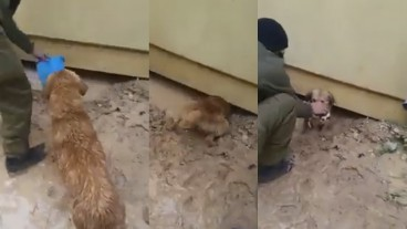 These screenshots show scenes from the video documenting how IDF soldiers helped a mother dog save seven puppies. Images via Facebook