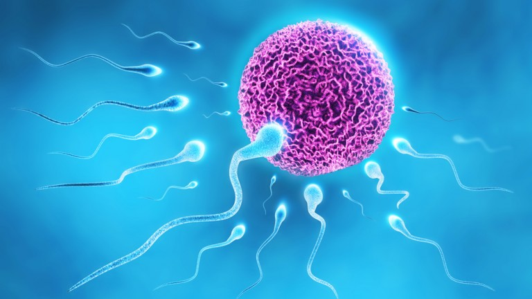 'Some of the best sperm candidates are slow or even immobile.' Photo by Shutterstock.com