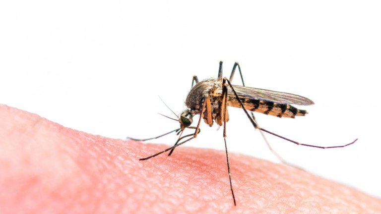 Zika is passed on to humans through the bite of the mosquito. Photo by www.shutterstock.com