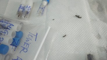 Insects collected in the Zika Forest. Photo courtesy of Dr. Leslie Lobel