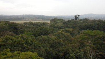 A panoramic view of the Zika Forest in Uganda. Photo courtesy of Dr. Leslie Lobel