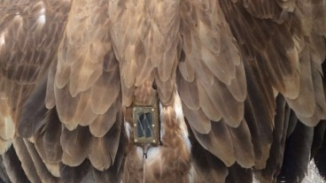 Authorities in Lebanon say the vulture has been released. Photo via bintjbeil.org