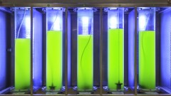 Algae can also be used as a biofuel.  Photo by www.shutterstock.com