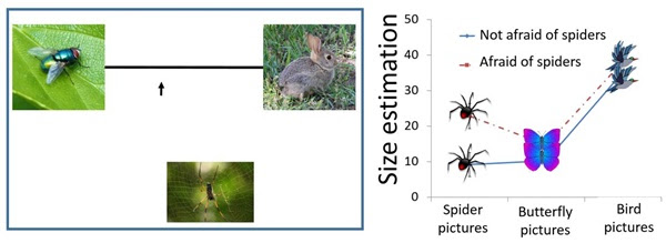 Trial study examples: On left, participants were asked to place the arrow on the line according to the size of the spider relative to a fly and a rabbit. On right, participants who were afraid of spiders rated only spiders as being significantly larger than other stimuli compared with participants who were not afraid of spiders. Graph courtesy of BGU
