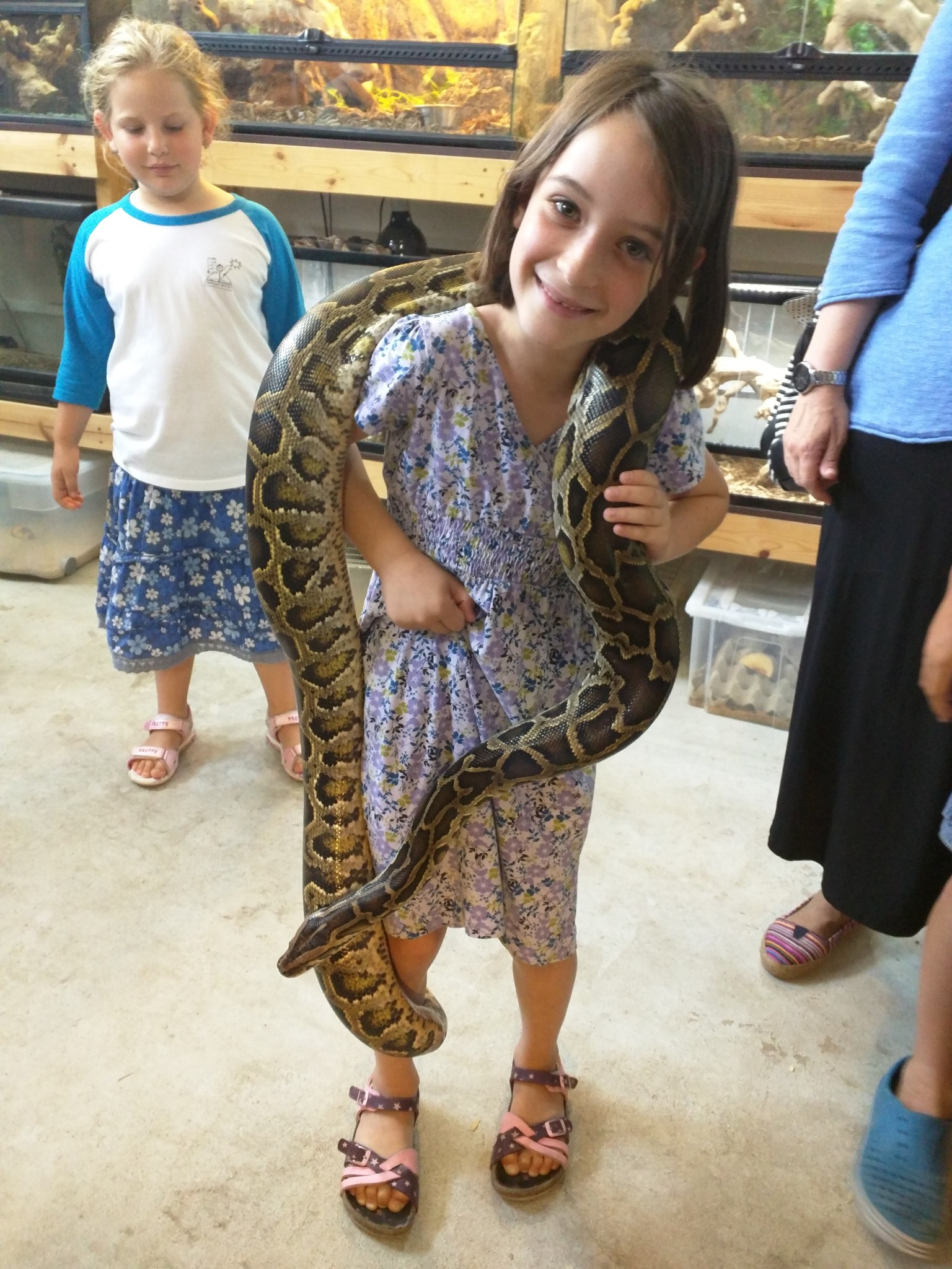 A young visitor gets all wrapped up in a snake at the Biblical Museum of Natural History. Photo: courtesy
