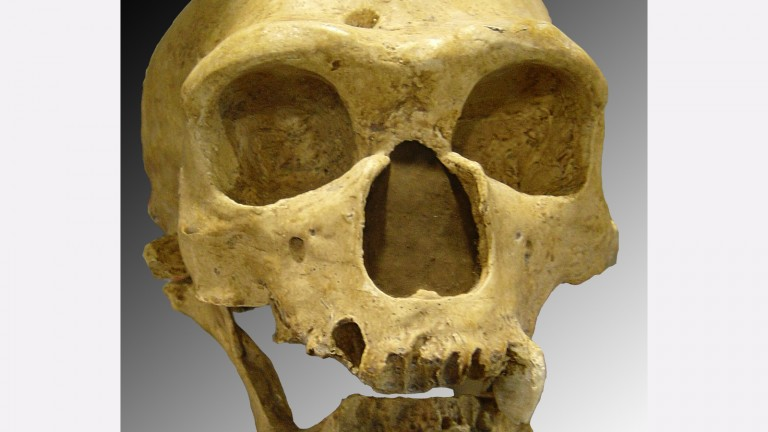 Neanderthal skull discovered in 1908 at La Chapelle-aux-Saints (France). Photo via Creative Commons