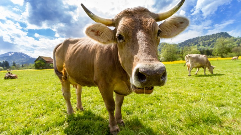 Dairy Farmers of America look to Israeli technologies to extract nitrogen from cow manure and concentrate it into usable and potentially marketable form while protecting the environment. Photo via pexels.com