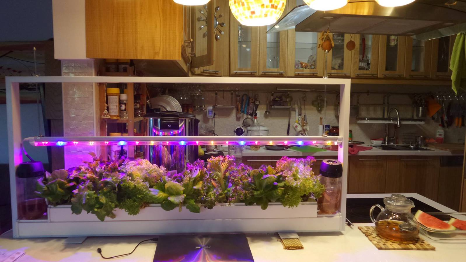 Home aeroponics kits from Aleinu will soon be available for sale. Photo via Facebook