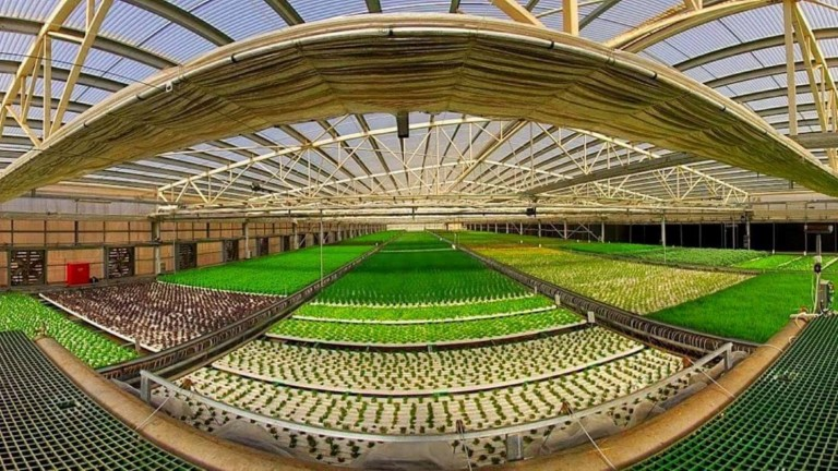 Aleinu grows 4,600 square meters of organic herbs and lettuce. Photo via Facebook