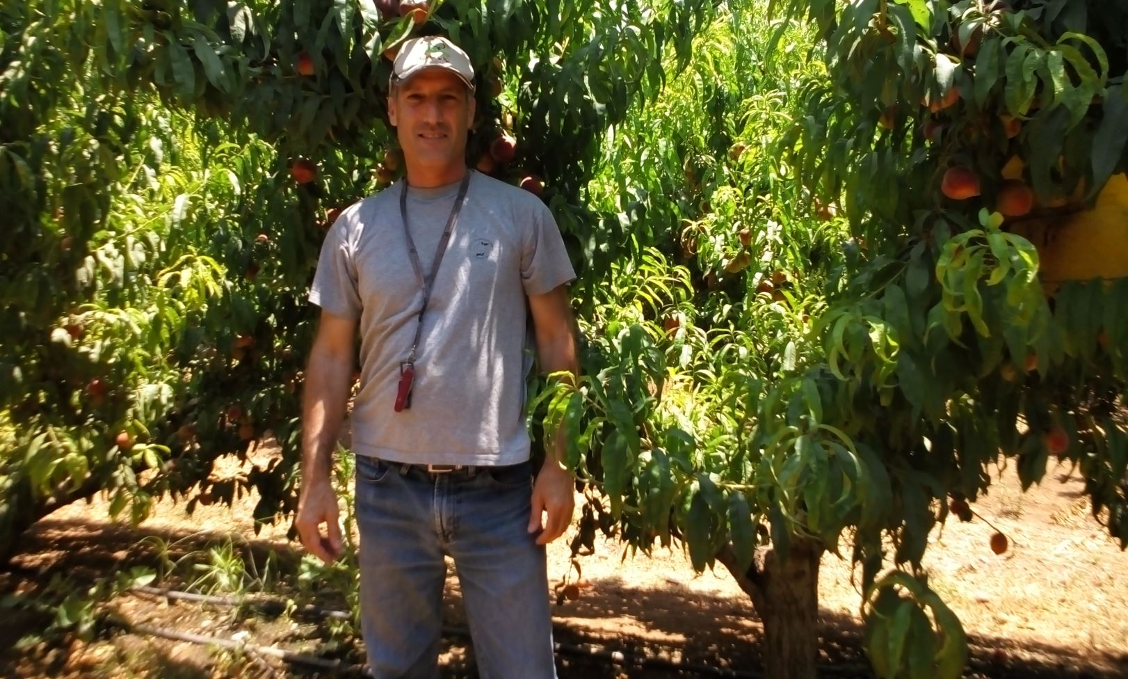 Biofeed CEO Nimrod Israely in the orchard. Photo: courtesy