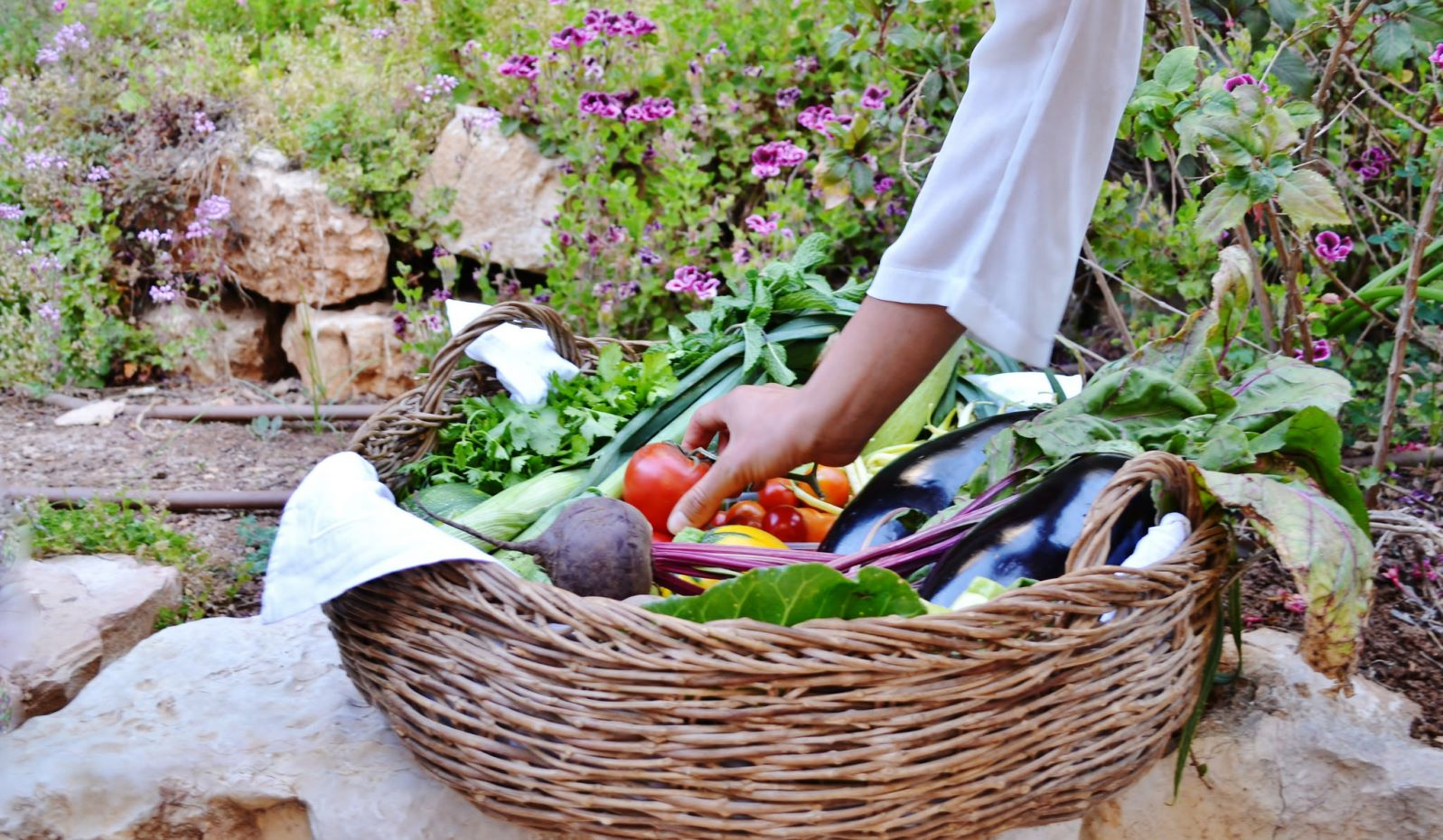A basket of vegetables grown at Kaima Beit Zayit. Photo: courtesy