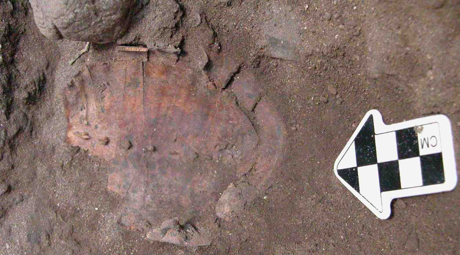 One of 86 tortoise shells found in a unique burial site analyzed by Hebrew University archaeologists. Photo by Leore Grosman
