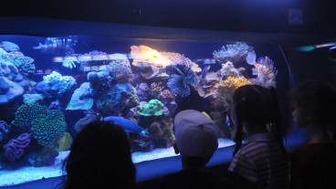 Observing coral and other underwater creatures in Eilat. Photo by Jorge Novominsky/FLASH90
