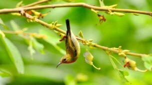 Sunbirds are naturally curious. Image via Shutterstock.com