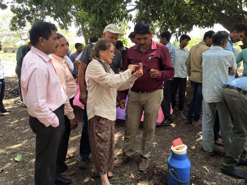 Learning about new mango tree rejuvenation techniques. Photo by MASHAV