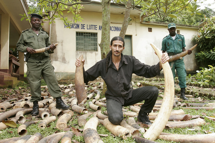 Ofir Drori's EAGLE Network builds cases against traffickers of ivory and other illegal products from the African bush. Photo: courtesy