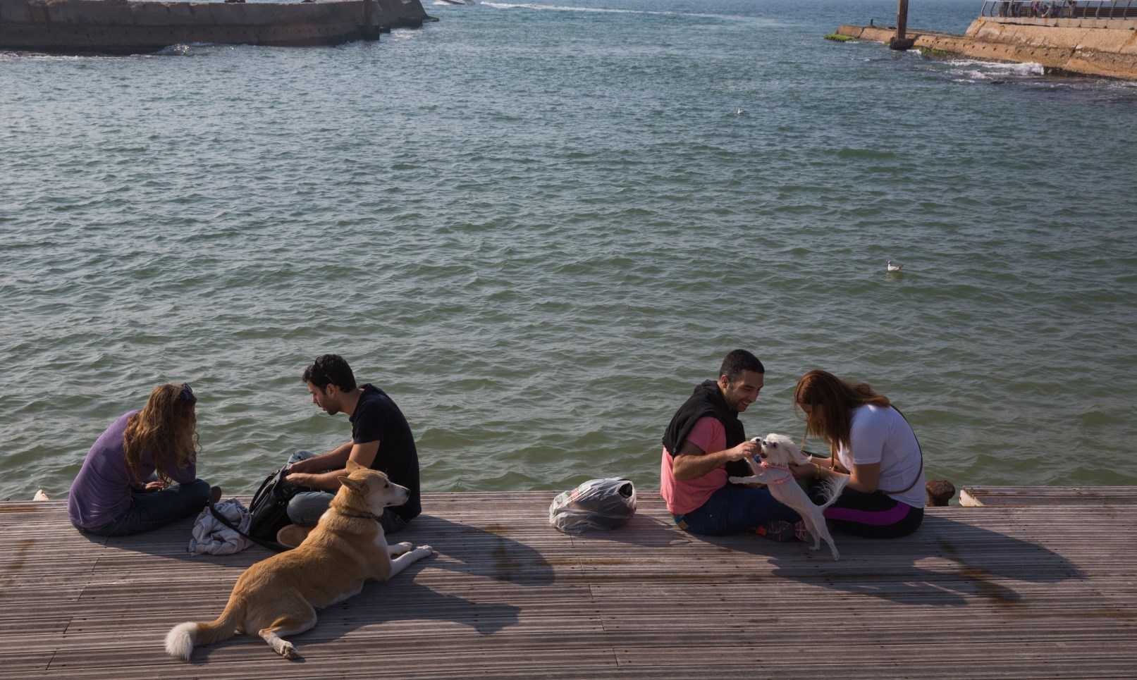 Friendships blossom among dog-owners at the Tel Aviv Port. Photo by Nati Shohat/FLASH90