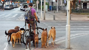 A dog walker doing his duty on Rothschild Boulevard in Tel Aviv. Photo by Dror Garti/FLASH90