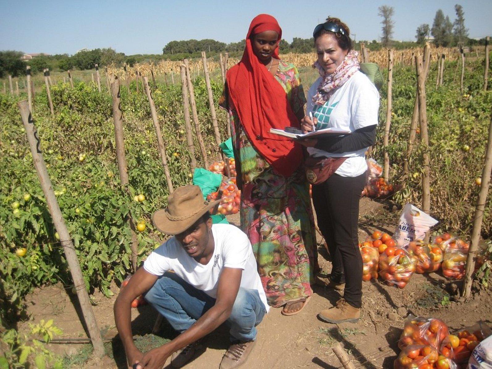 Israeli NGO Fair Planet is helping Ethiopian tomato farmers improve their crops. Photo: courtesy