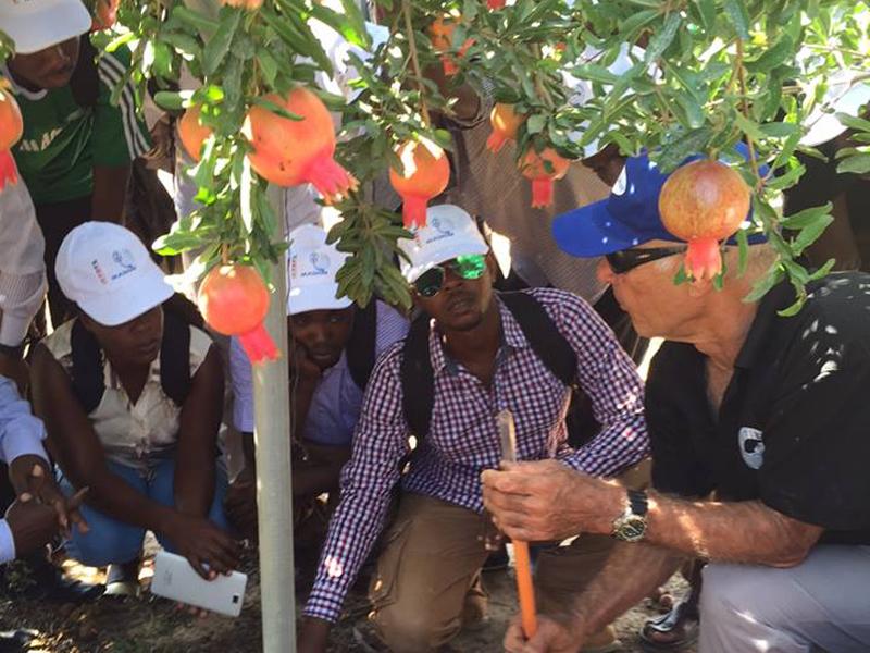 Kenyan farmers learning about irrigation methods for pomegranate groves. Photo courtesy of MASHAV