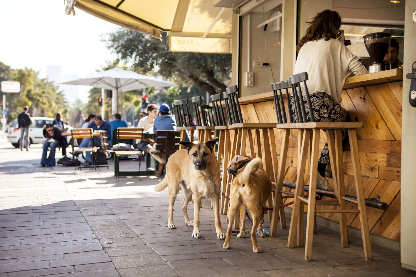 Many Tel Aviv residents own more than one dog. Photo by Kfir Sivan