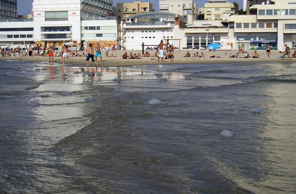 Tel Aviv beachgoers beware of jellyfish. Photo via Shutterstock.com