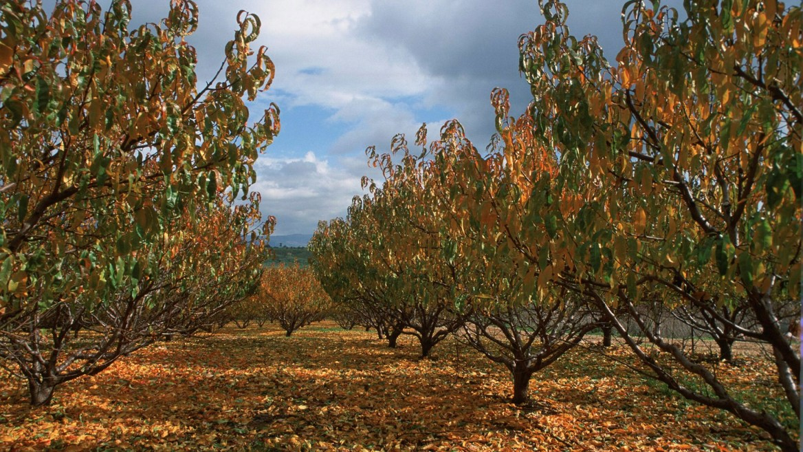 Autumn trees in Metula, northern Israel. Photo by Doron Horowitz/Flash90