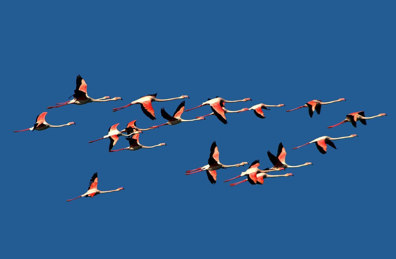 """Flamingos"" by Elad Gonen"