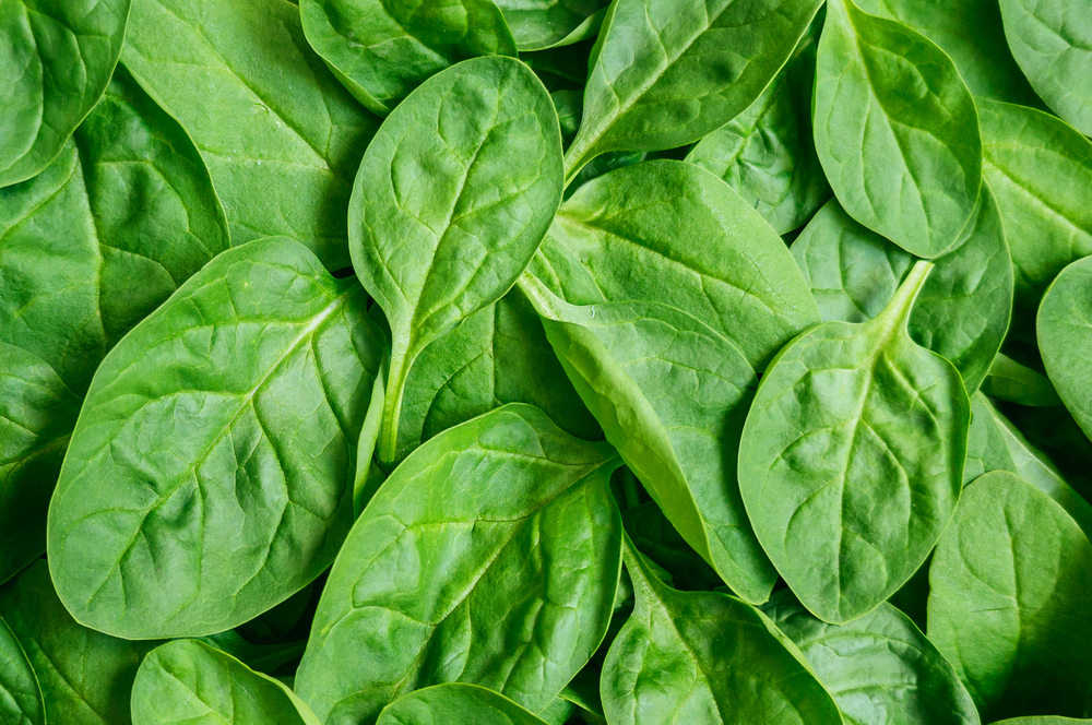 Spinach doesn't just provide energy for bodies, but also electricity and hydrogen. Photo by Shutterstock.