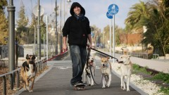 A Jerusalem dog-walker. Photo by Yossi Zamir/FLASH90