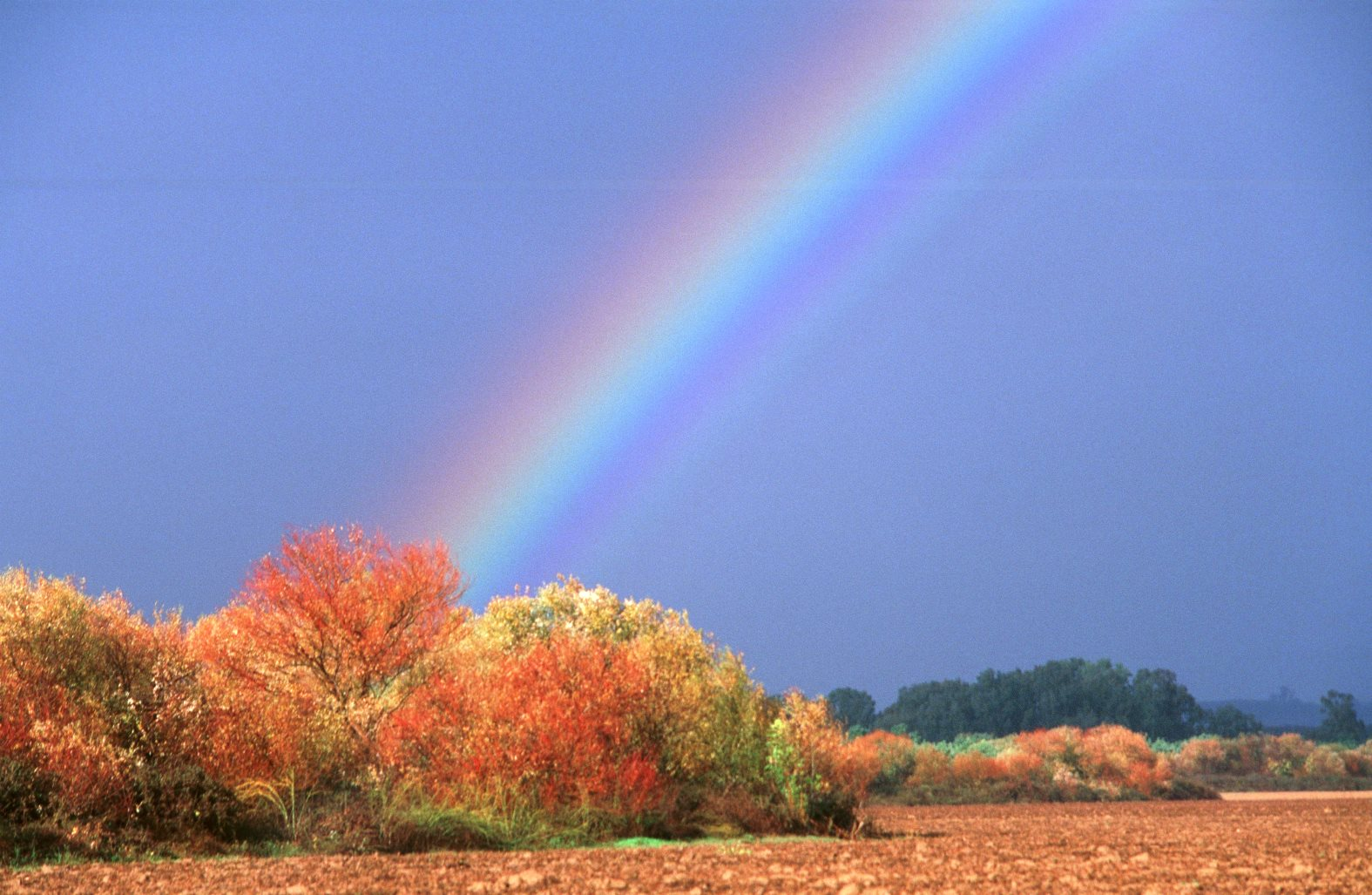 A rainbow stands behind autumn trees in Tel Dan Nature Reserve in northern Israel. Photo by Doron Horowitz/FLASH90