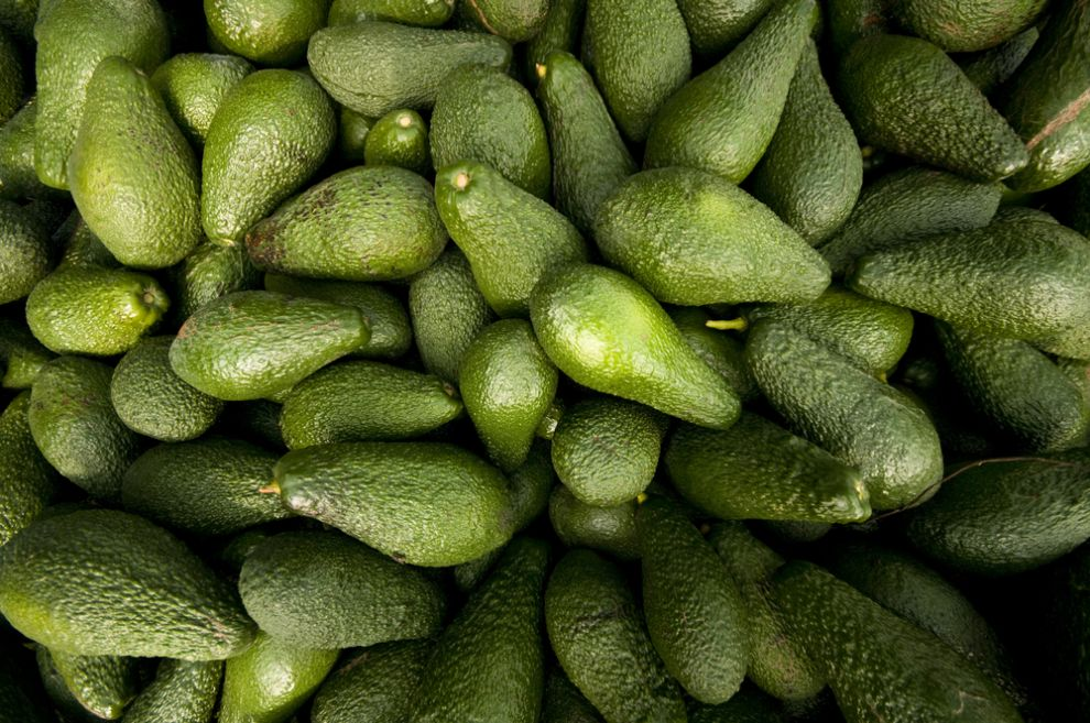 Israeli avocados are harvested in fall and winter. Photo via Shutterstock.com