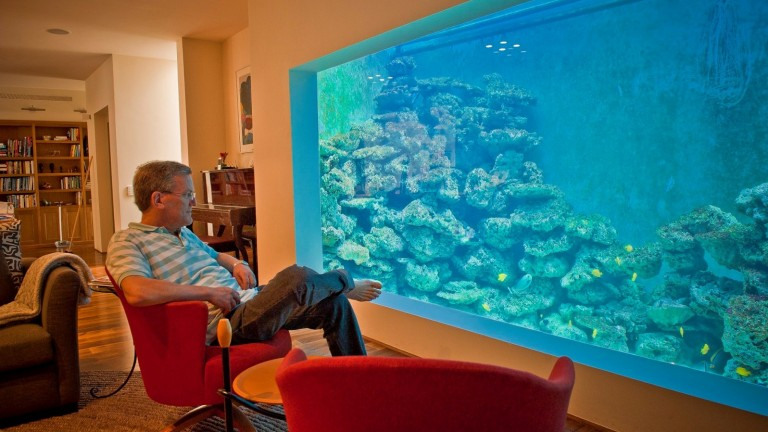 Eli Fruchter's home reef holds 150 fish plus corals. Photo via Facebook/ElisReefAquarium