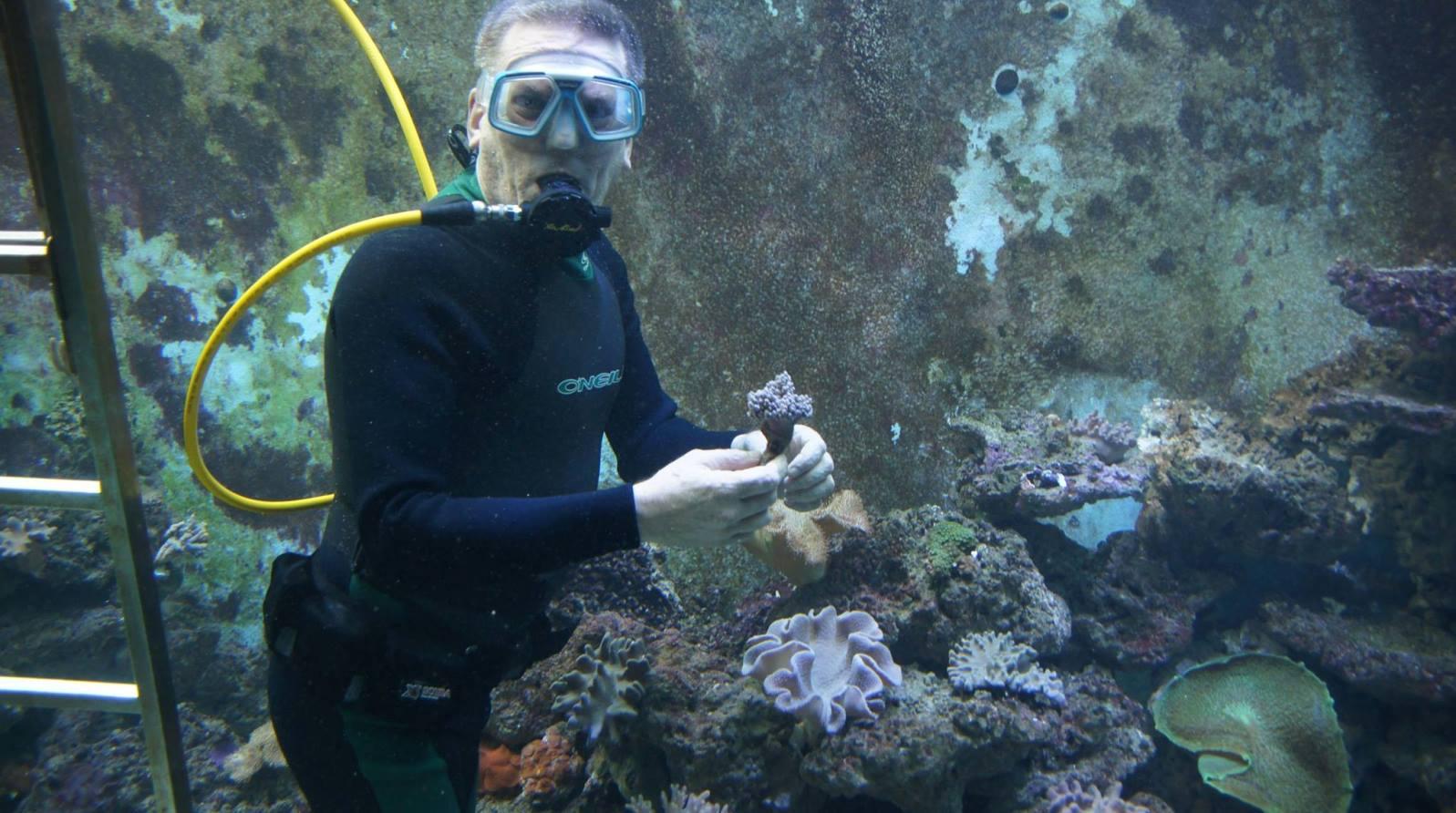 Eli's Reef Aquarium is large enough for scuba diving. Photo via Facebook/ElisReefAquarium