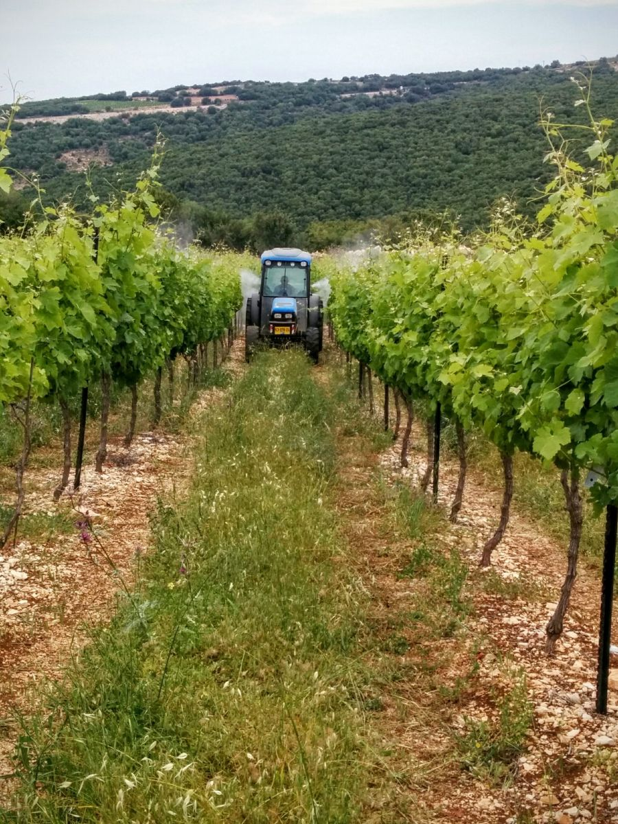 Spraying a vineyard. Photo courtesy of FieldIn