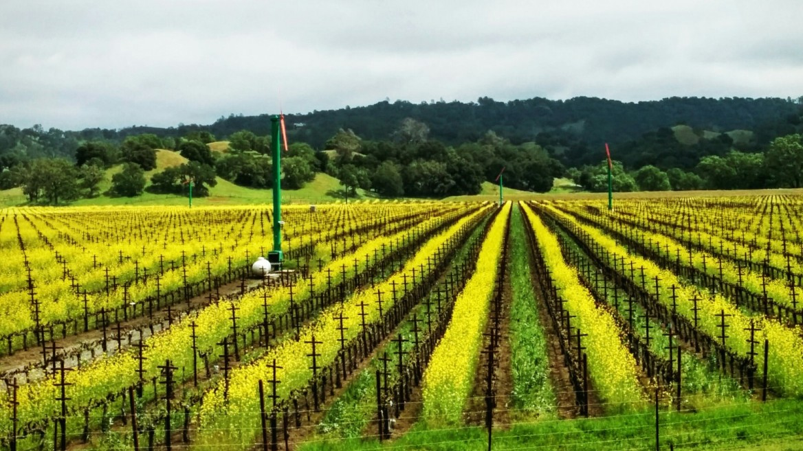 Wine grapes are one of the specialty crops for which FieldIn is designed. Photo: courtesy