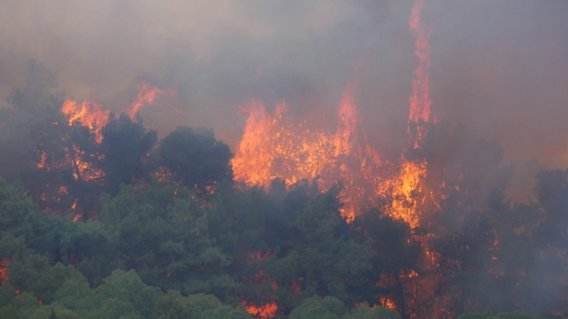 Flame and smoke engulfing trees in Haifa. Photo courtesy of Haifa municipality