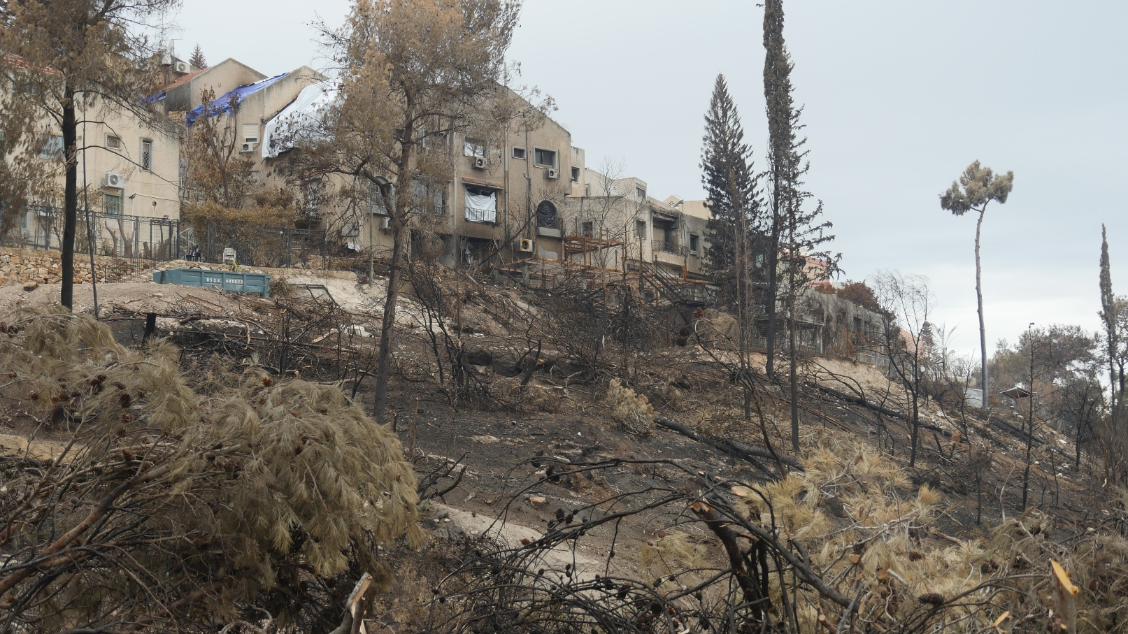 A view of scorched forest and homes in Haifa, November 2016. Photo courtesy of Haifa municipality