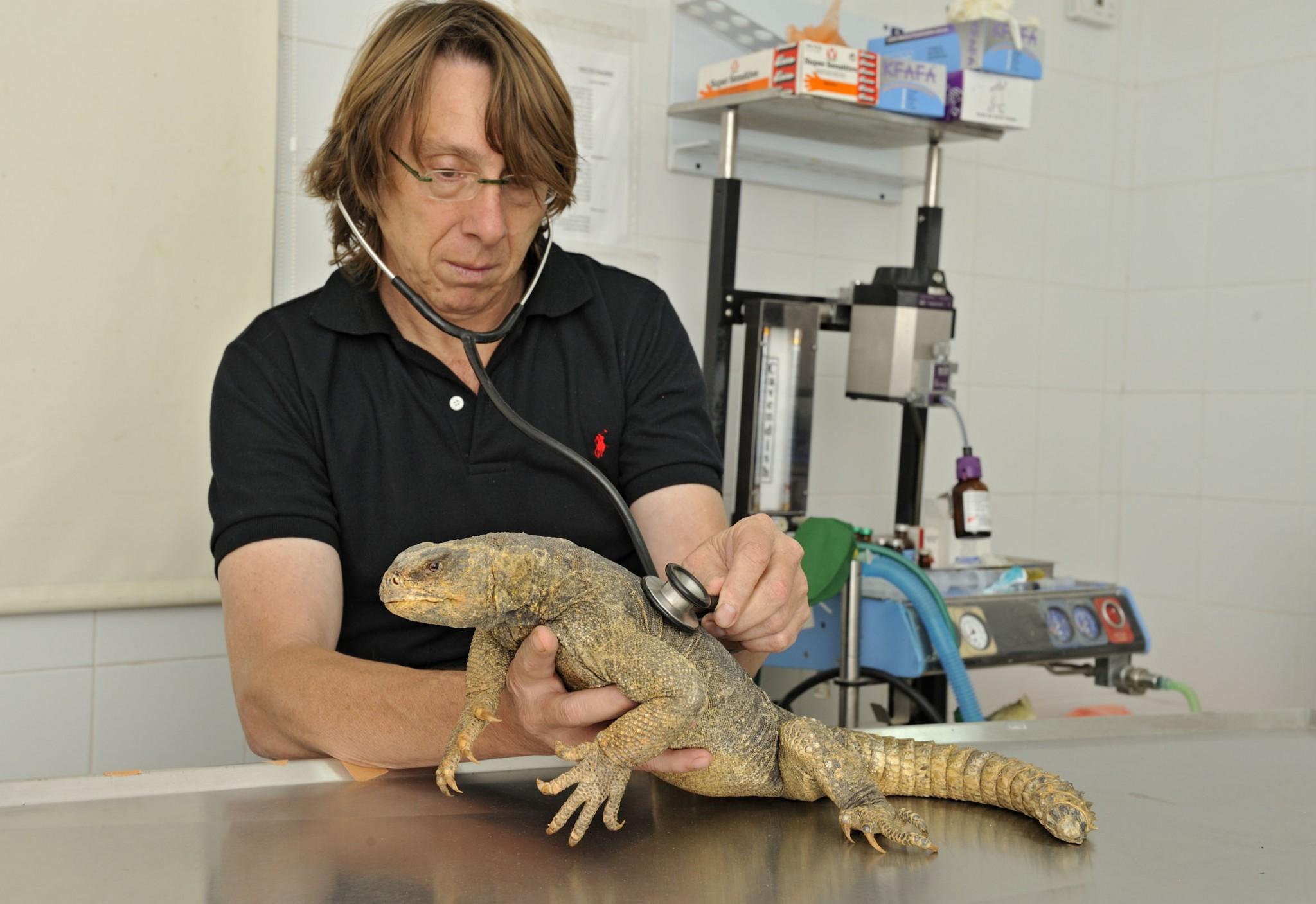 Dr. Yigal Horowitz with a resident of the Ramat Gan Safari. Photo courtesy Zoological Center Tel Aviv-Ramat Gan Safari