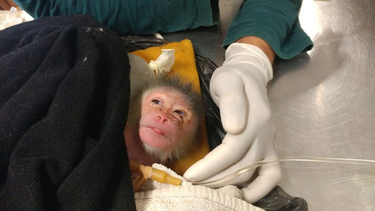 Vets at Ramat Gan Safari nursed this newborn mandrill back to health. Photo courtesy of Zoological Center Tel Aviv - Ramat Gan Safari